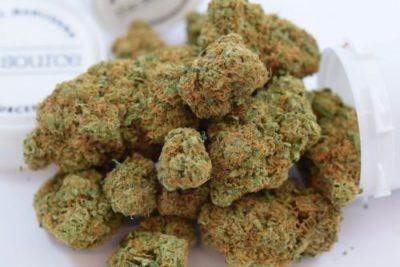 Acapulco Gold Weed Strain