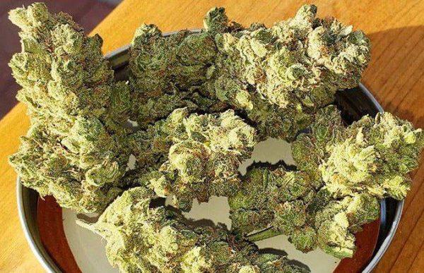 Blue Cheese Marijuana Strain