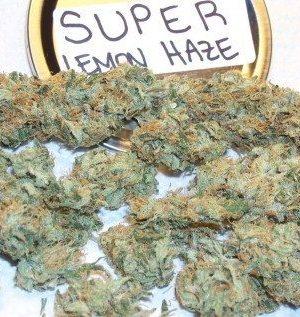 Super Lemon Haze Strain UK
