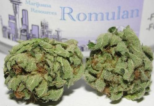 Buy Romulan Weed Strain