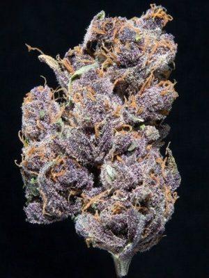 Buy Pacific Blue Marijuana Strain