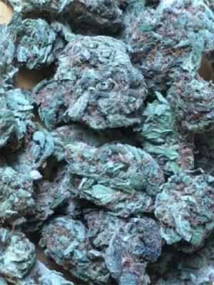 White Gold Weed Strain UK