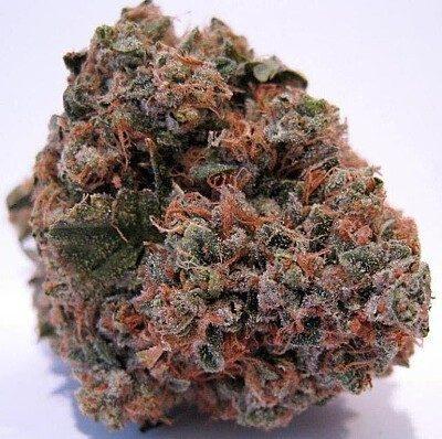 Purple Kush Strain Online
